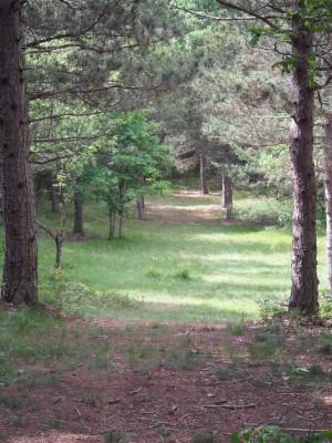 Whitehall Township DGC, Main course, Hole D6 Midrange approach