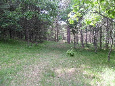 Whitehall Township DGC, Main course, Hole D6 Long approach