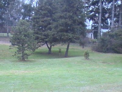 Arboretum-Spiker Park, Main course, Hole 12 Short tee pad