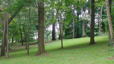 Lincoln Park (Oak Ledges), Main course, Hole 8 Tee pad
