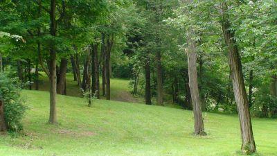 Lincoln Park (Oak Ledges), Main course, Hole 14 Tee pad