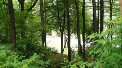 Lincoln Park (Oak Ledges), Main course, Hole 6 Tee pad