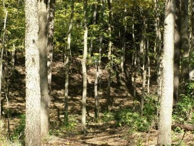 Buck Creek State Park, Main course, Hole 1 Tee pad