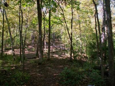 Buck Creek State Park, Main course, Hole 4 Tee pad