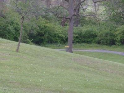 Hedges Boyer Park, Main course, Hole 10 Short approach