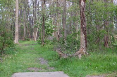 Clarence Darrow Park (Young's Run), Main course, Hole 12 Short tee pad