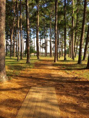 Brahan Springs Park, Main course, Hole 13 Tee pad
