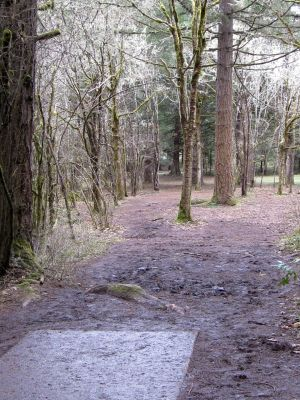 Dexter Park, Main course, Hole 4 Tee pad