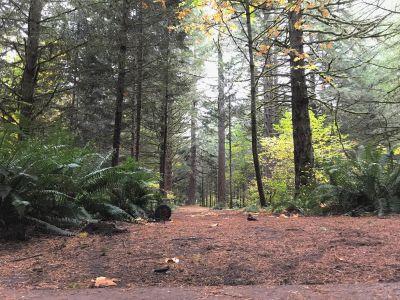 Milo McIver State Park, Riverbend DGC, Hole 13 Tee pad