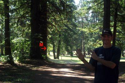 Timber Park, Main course, Hole 8 Tee pad