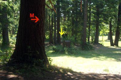 Timber Park, Main course, Hole 8