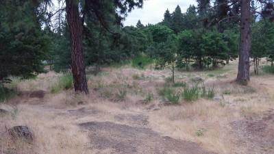 Hood River DGC, Main course, Hole 9 Midrange approach