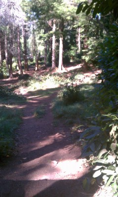 Windsor Park, Main course, Hole 4 Tee pad