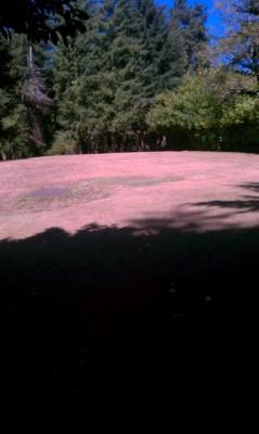 Windsor Park, Main course, Hole 1 Short tee pad