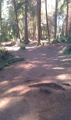 Windsor Park, Main course, Hole 5 Tee pad