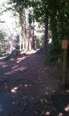 Windsor Park, Main course, Hole 3 Tee pad