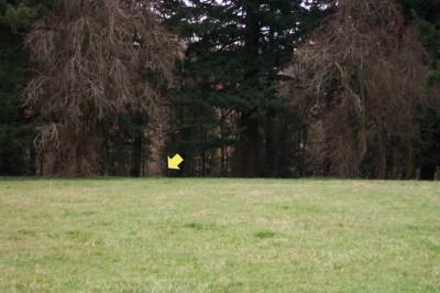 Portland Lunchtime DGC, Main course, Hole 5 Midrange approach