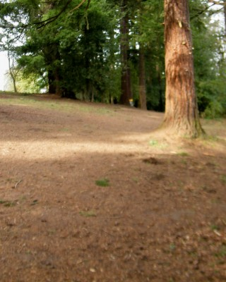 Portland Lunchtime DGC, Main course, Hole 10 Tee pad