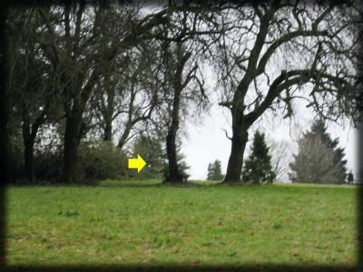 Portland Lunchtime DGC, Main course, Hole 9 Midrange approach