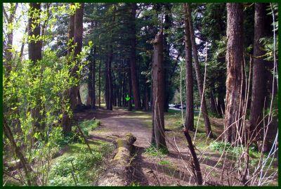 Dabney State Park, Main course, Hole 17 Tee pad