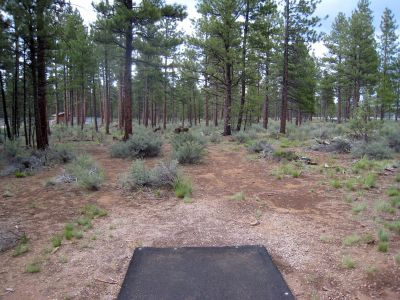 Hyzer Pines at S.O.A.R., Main course, Hole 15 Tee pad