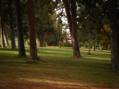 Tree Top DGC at Sorosis Park, Main course, Hole 10 Midrange approach