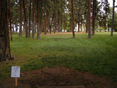 Tree Top DGC at Sorosis Park, Main course, Hole 6 Tee pad