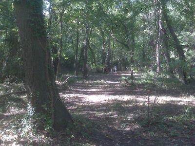 Anson B. Nixon Park, Main course, Hole 6 Midrange approach