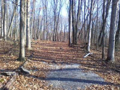 Gifford Pinchot State Park, Quaker's Challenge, Hole 8