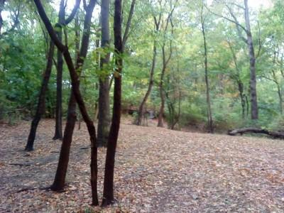 Schenley Park, Main course, Hole 17 Midrange approach