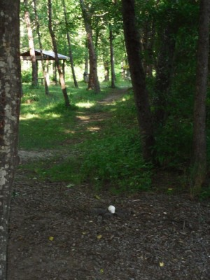 Black Mountain DGC, Main course, Hole 5 Long tee pad