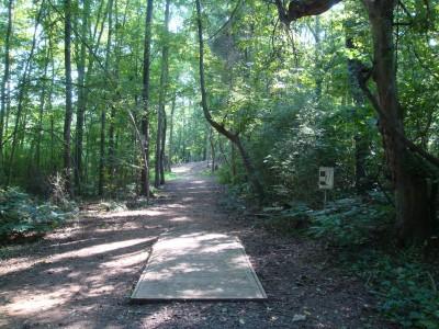 Hornets Nest Park, Main course, Hole 8 Tee pad
