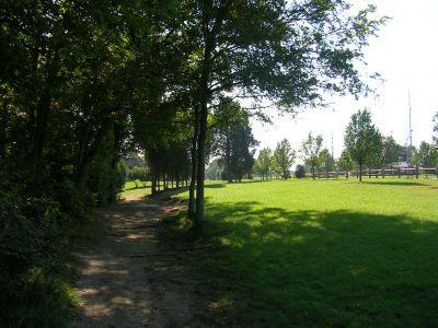 Johnson Street Park, Main course, Hole 3 Middle tee pad