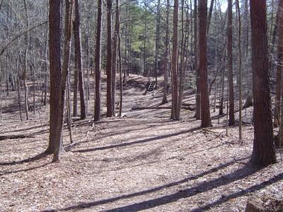 Buckhorn at Harris Lake County Park, Main course, Hole 15 Tee pad