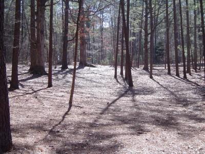 Buckhorn at Harris Lake County Park, Main course, Hole 18 Midrange approach