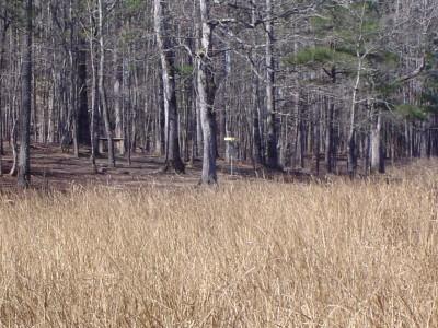 Buckhorn at Harris Lake County Park, Main course, Hole 10 Long tee pad