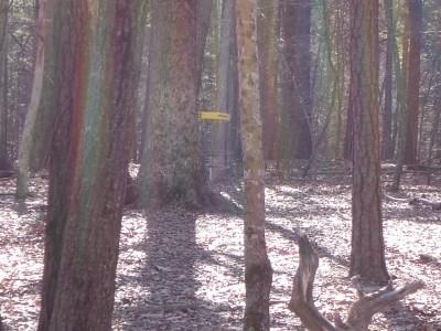 Buckhorn at Harris Lake County Park, Main course, Hole 12 Midrange approach