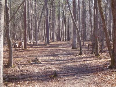 Buckhorn at Harris Lake County Park, Main course, Hole 4 Long tee pad