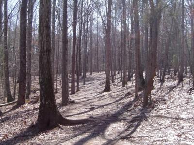 Buckhorn at Harris Lake County Park, Main course, Hole 12 Tee pad