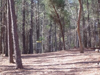 Buckhorn at Harris Lake County Park, Main course, Hole 13 Midrange approach