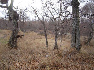 Kincaid Park, Main course, Hole 16 Midrange approach