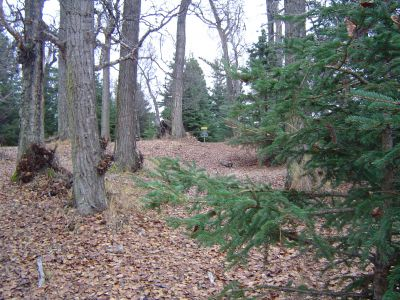 Kincaid Park, Main course, Hole 11 Midrange approach
