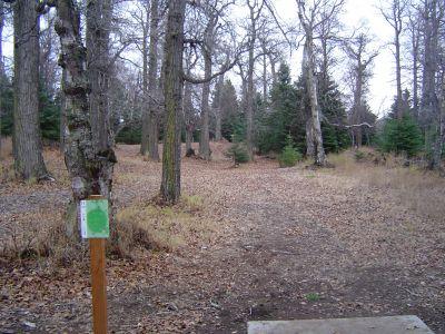 Kincaid Park, Main course, Hole 11 Tee pad