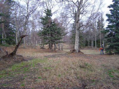 Kincaid Park, Main course, Hole 6 Long approach