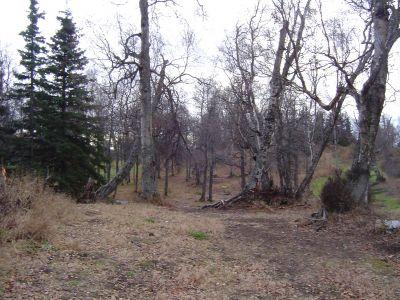 Kincaid Park, Main course, Hole 13 Midrange approach