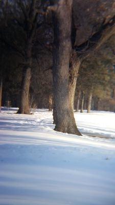 C.P. Adams Park, Main course, Hole 13 Long tee pad