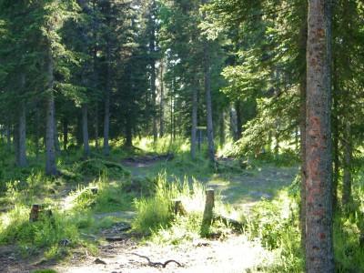 Kenai Eagle, Main course, Hole 10 Midrange approach