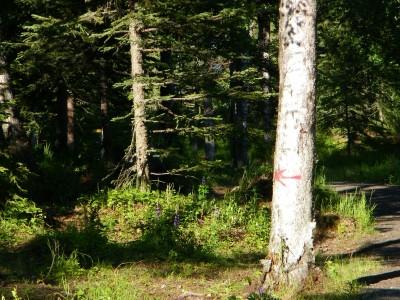 Kenai Eagle, Main course, Hole 5 Long approach