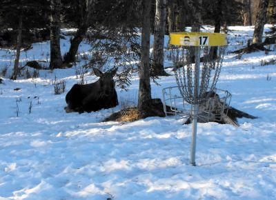 Kenai Eagle, Main course, Hole 17 Putt