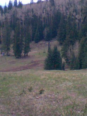 Arizona Snowbowl, Main course, Hole 18 Reverse (back up the fairway)